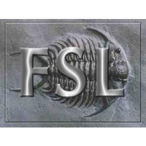 FSL-BIANCA